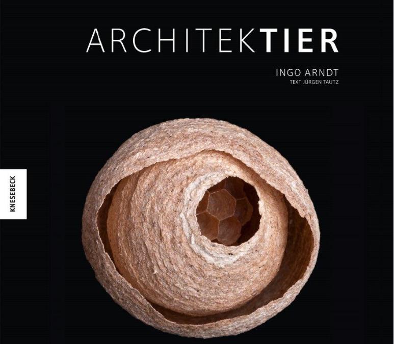 """""""Architektier"""" – Baumeister der Natur"""